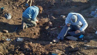 ueberreste-eines-neuen-fleischfressenden-dinosauriers-mit-kleinen-fluegeln,-der-in-argentinien-entdeckt-wurde